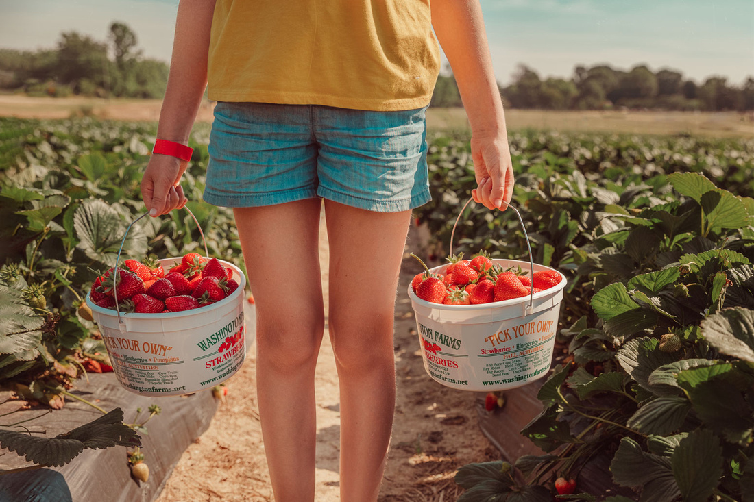 two gallon baskets of strawberries held up by a young girl