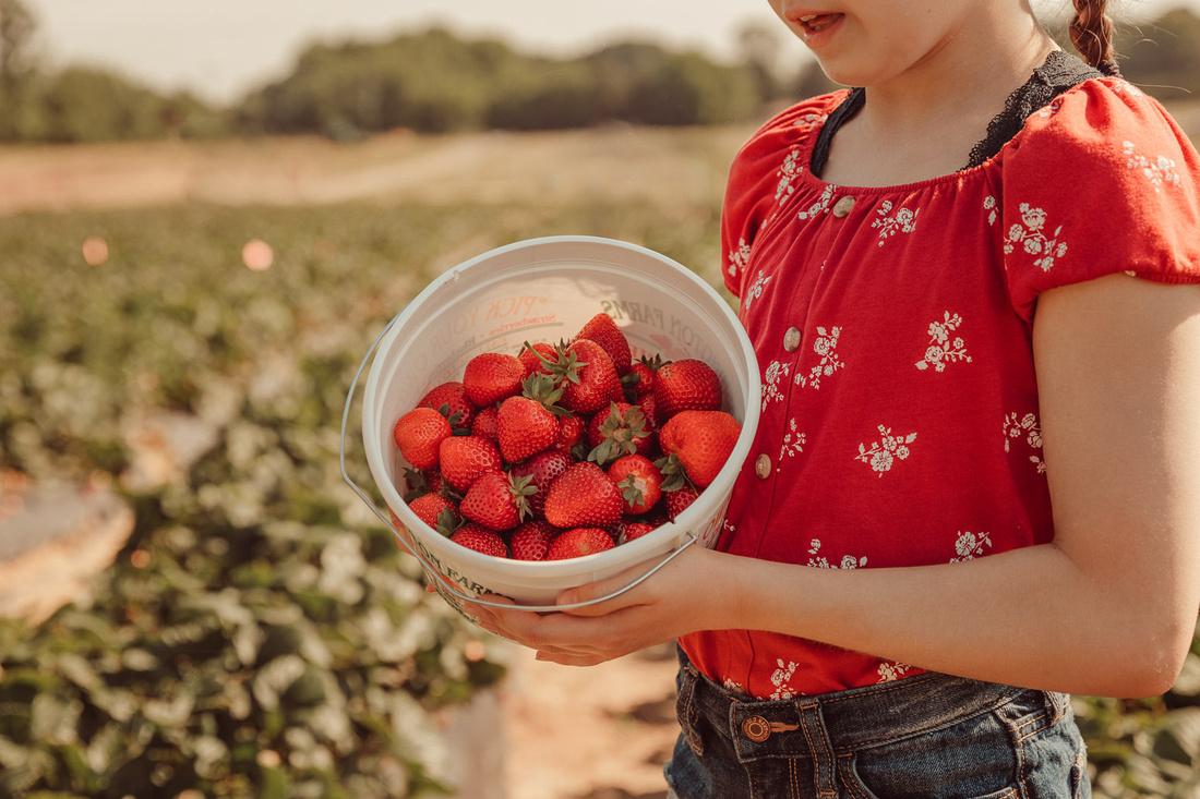 girl holding up a half full bucket of freshly picked strawberries