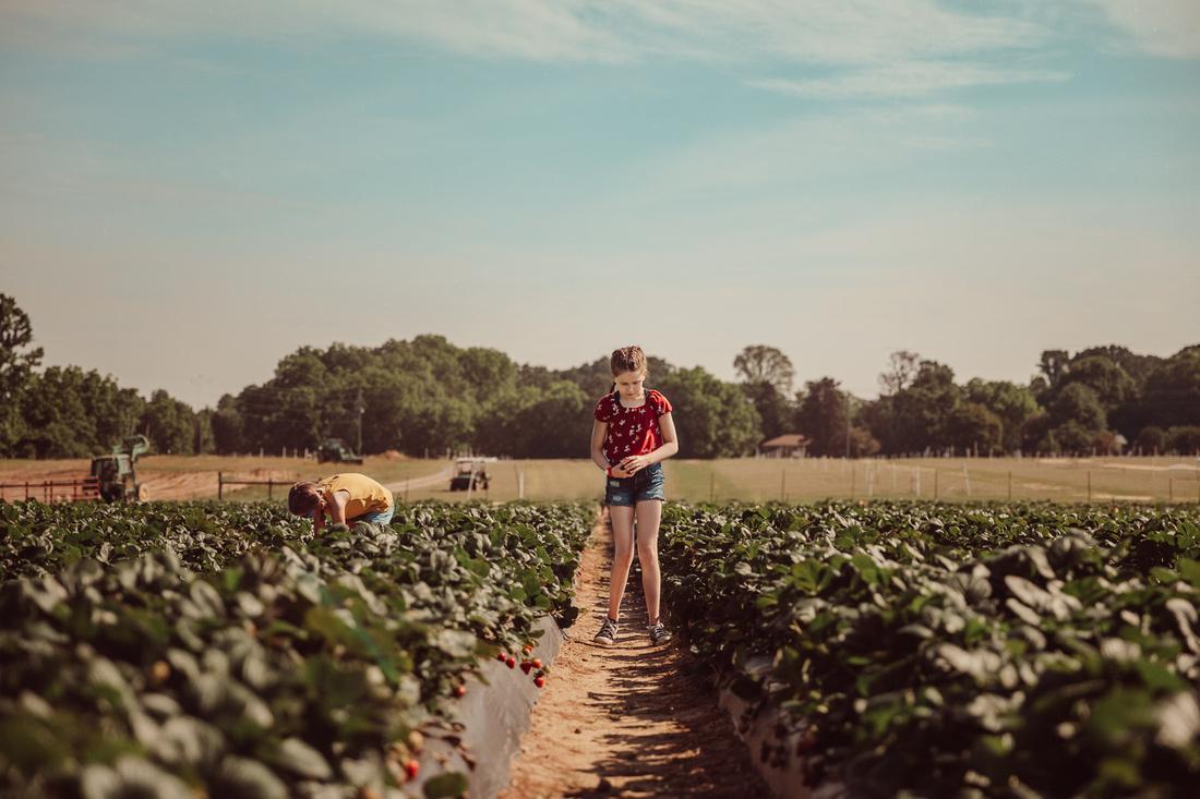 girl examining freshly picked strawberries at Washington Farms