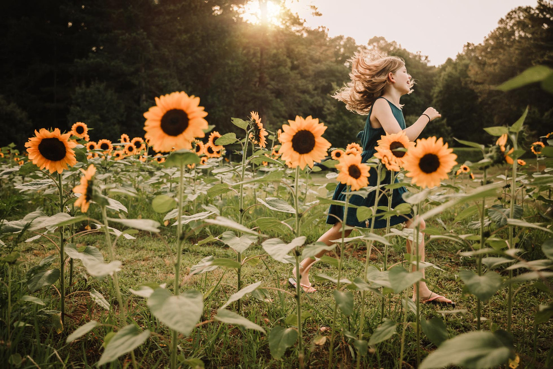 girl happily skipping through a field of sunflowers by monica carlson