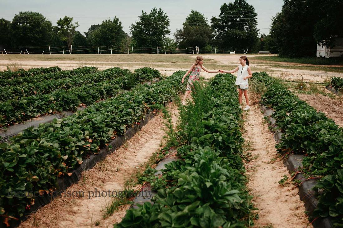 berry picking monica carlson photography, washington farms