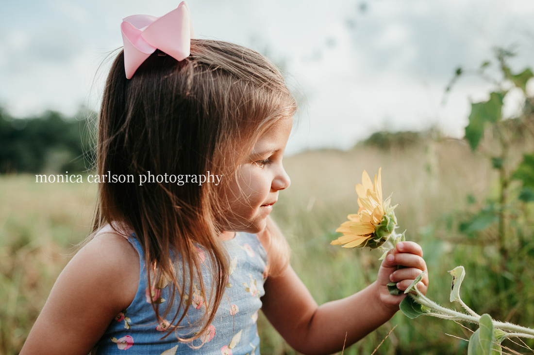 three year old girl looking closely at a sunflower