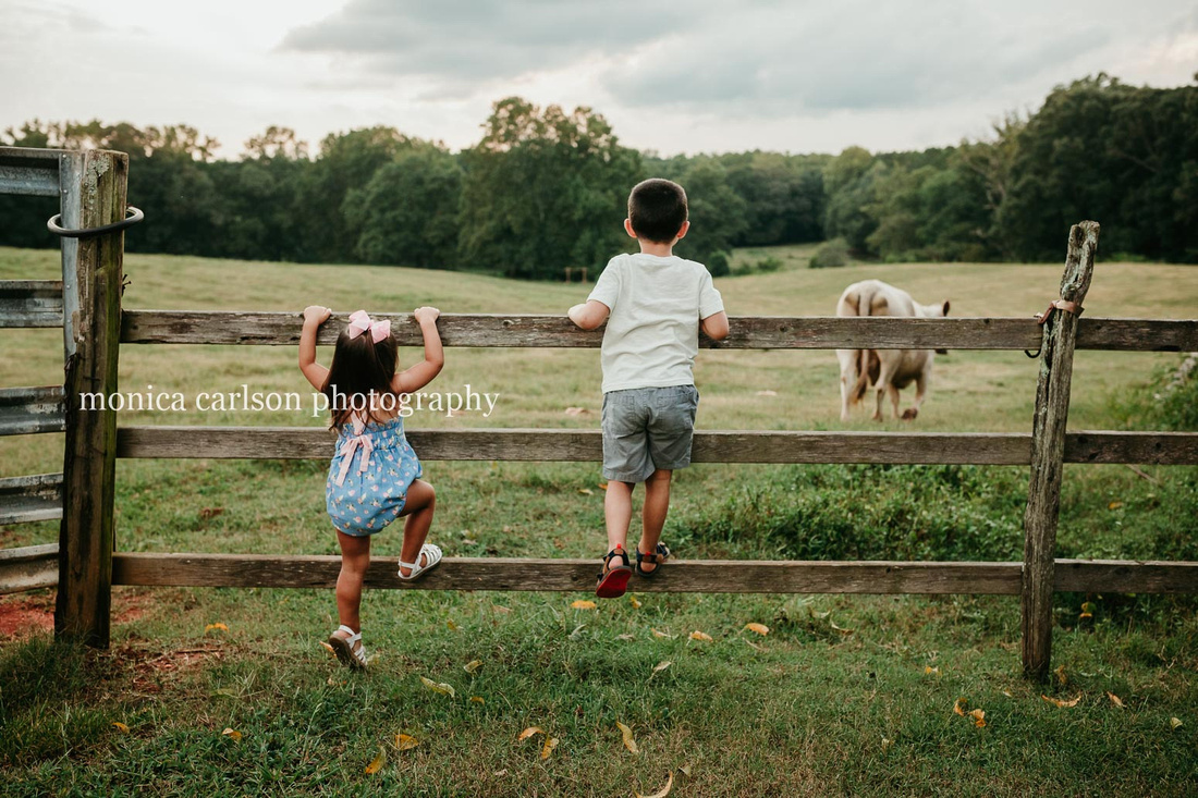 two young siblings standing on a wooden fence watching cows in the distance at milford family farm