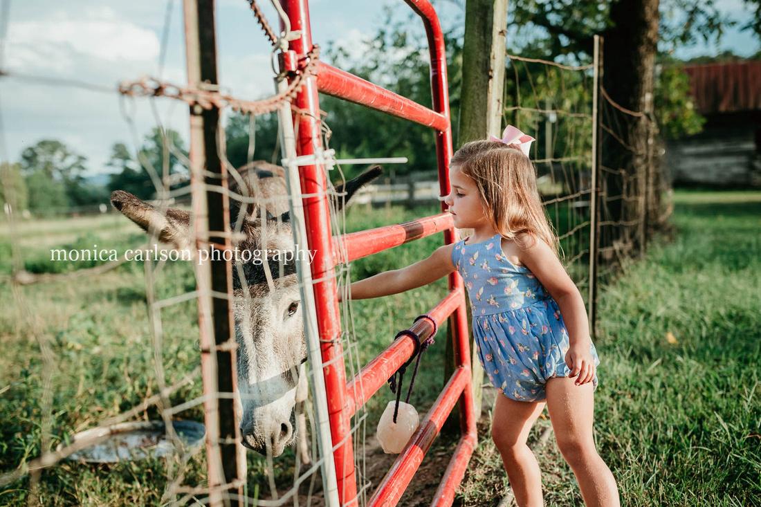 three year old girl petting a donkey through a fence at a farm