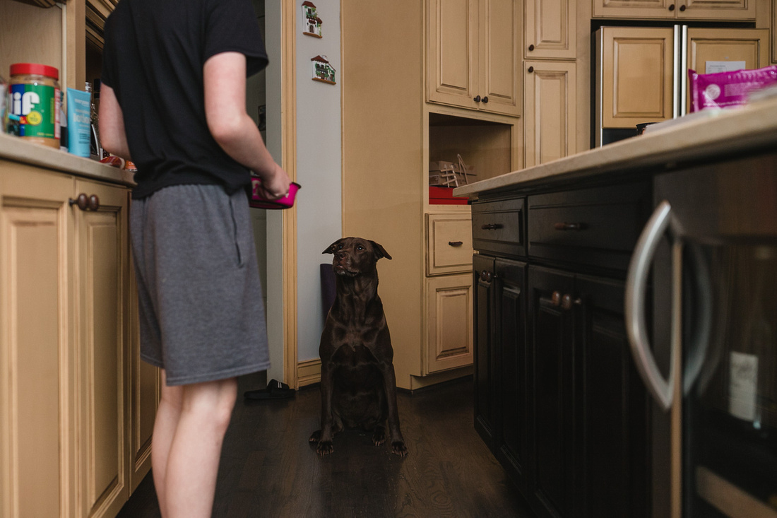 brown dog sits patiently while boy gets ready to feed