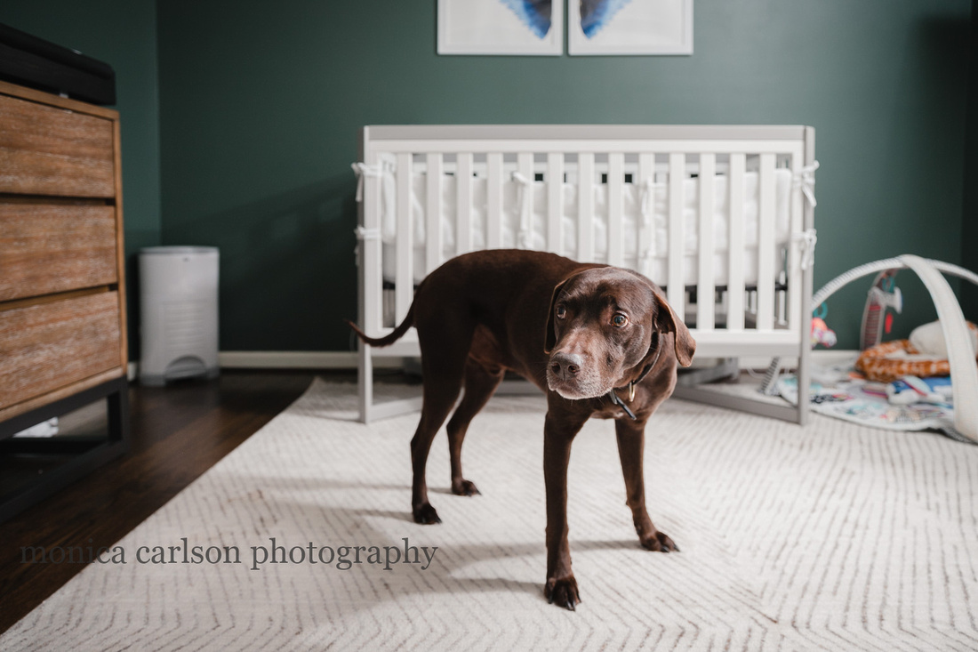 dog protectively standing in front of a crib