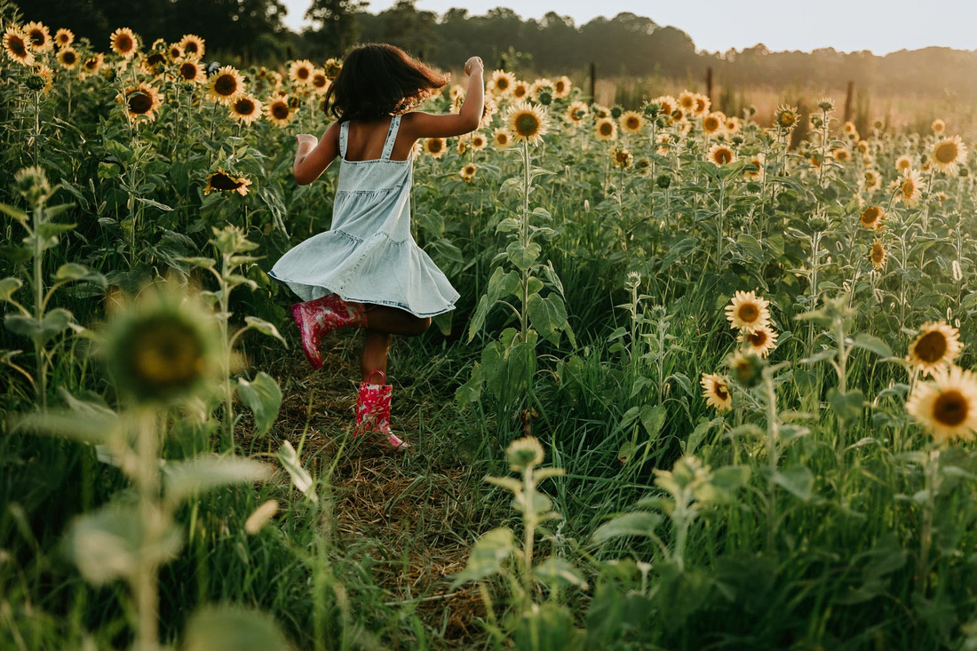 little twirls on a field of sunflowers while wearing rain boots